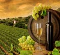 Barossa Valley Attractions